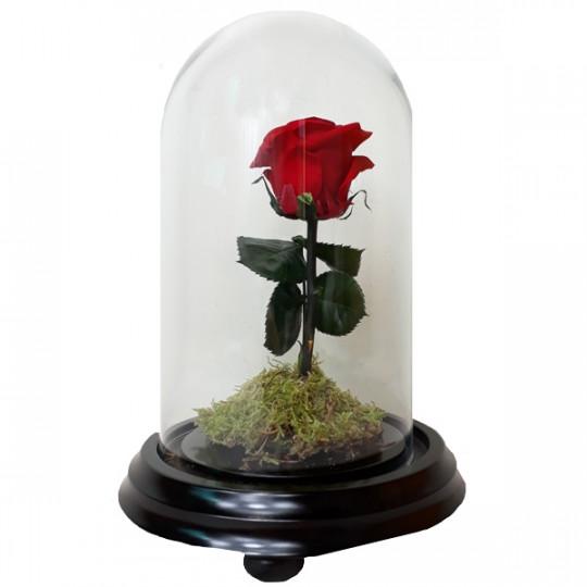 Rosa amor verdadero